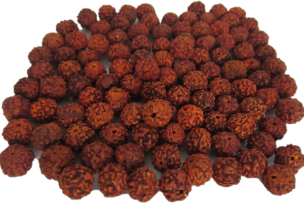 Rudraksha – The Purest form of divinity